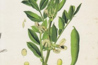 """""""Scientia amabilis"""" – Könyv a Biblia növényeiről"""